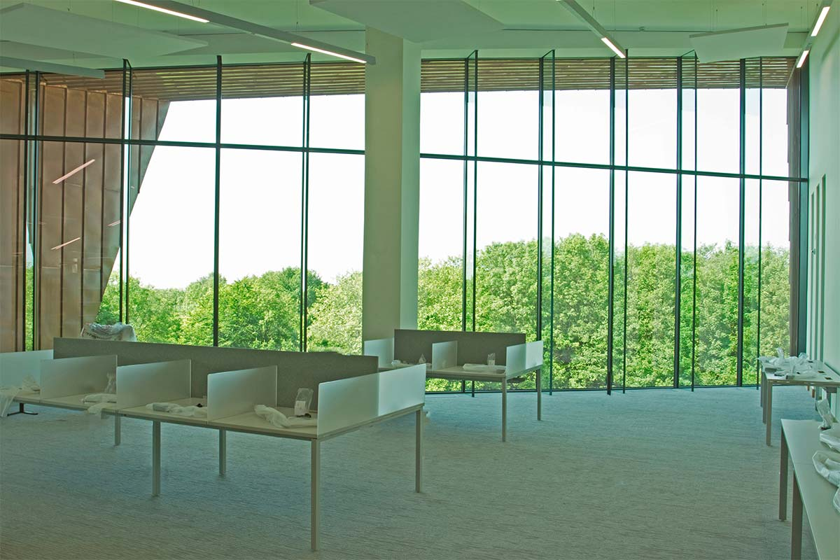 Looking out at the trees from the Glucksman Library in UL
